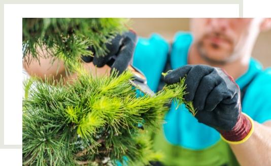 Soluciones de jardinería para todo tipo de necesidades