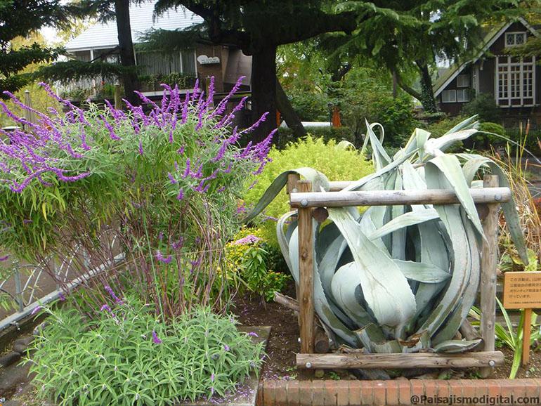 Las claves básicas para crear un jardín
